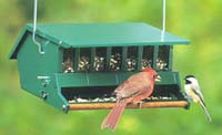 {Birds at hanging feeder image}