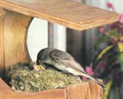 {Nest image}