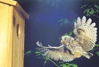 {Owl image}