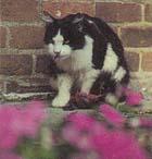 {Cat image}